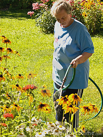 Woman watering glorious daisies