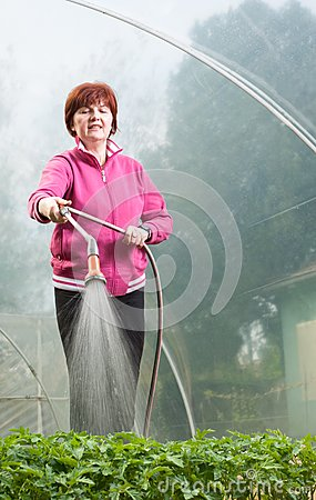Woman watering  Seedling