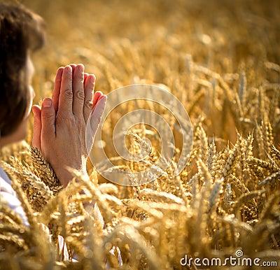 Woman in wheat field - Prayer