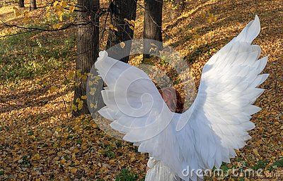 A woman in a white angel costume on a background of the autumn landscape Stock Photo