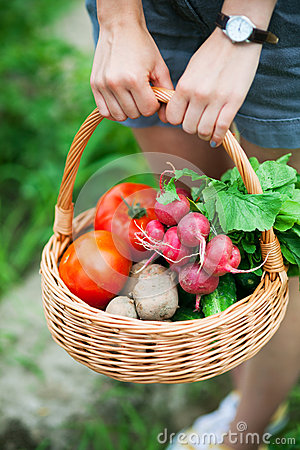 Free Woman With Basket Of Vegetables Royalty Free Stock Photography - 25693557