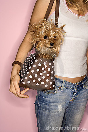 Free Woman With Dog In Bag. Royalty Free Stock Images - 2045339