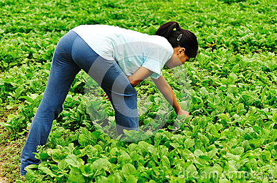 Woman working in vegetable field