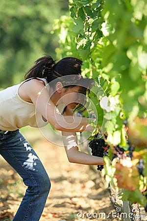 Woman working in vineyard
