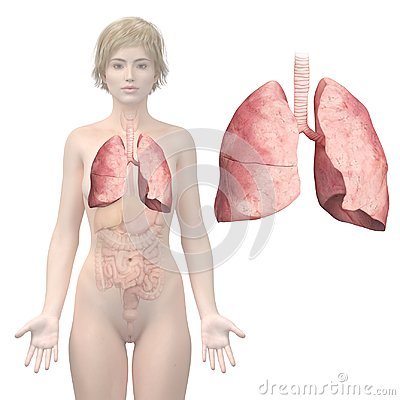 Free Womans Lung Royalty Free Stock Photo - 100716575