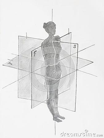Free Women Anatomical Planes Stock Image - 35006501