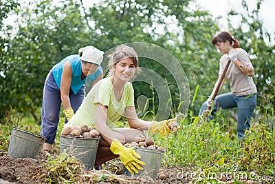 Women harvesting potatoes