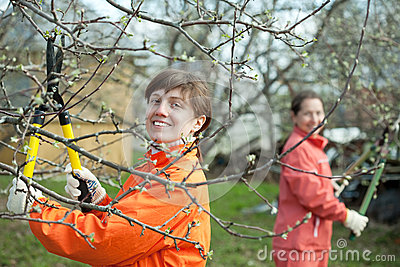 Women pruning fruits tree