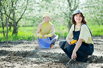 Women sows seeds in soil