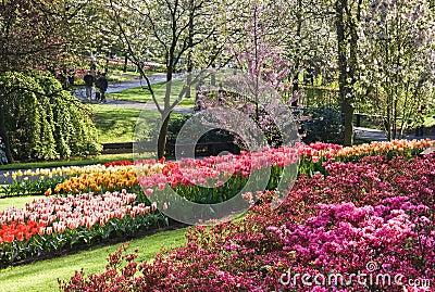 Wonderful blooming spring garden in april
