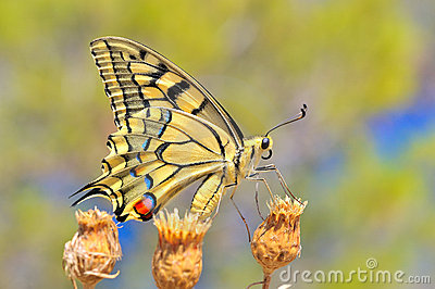 Wonderful butterfly in nature