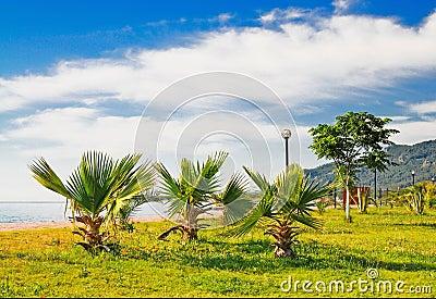 Wonderful clouds above tropical beach.