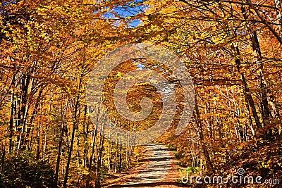 Wonderful Fall Color Road
