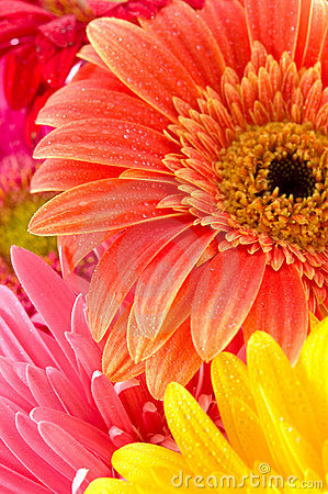 Free Wonderful Flowers Stock Photography - 14150972