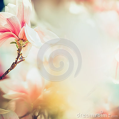 Free Wonderful Magnolia Blossom In Sun Light , Springtime Nature Background, Floral Border, Pastel Color Royalty Free Stock Photos - 90654508