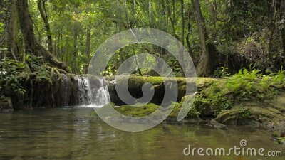 Wonderful scenery of small waterfall that flowing from the jungle through the green plants into the natural pond. stock footage