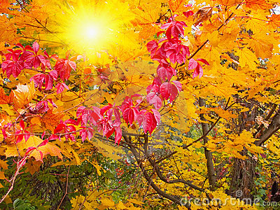 Wonderful sunbeams into fall forest.