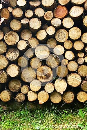 Free Wood Stock Photography - 10556242