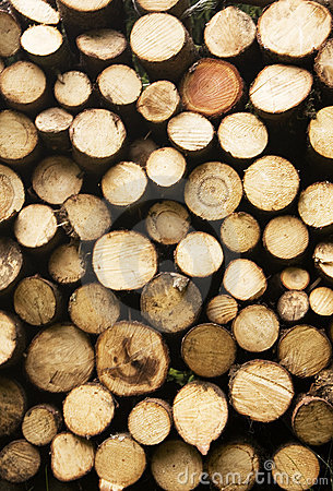 Free Wood Royalty Free Stock Photo - 11821915