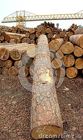 Free Wood Stock Photos - 2446843