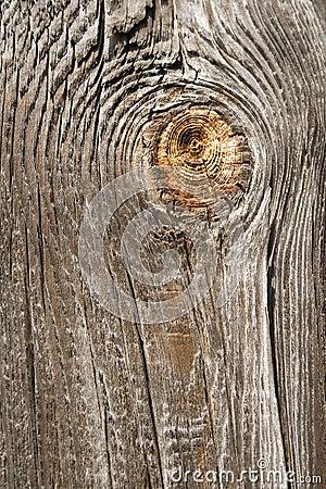 Free Wood Royalty Free Stock Photo - 3113865