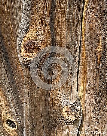 Free Wood Stock Photography - 3116952