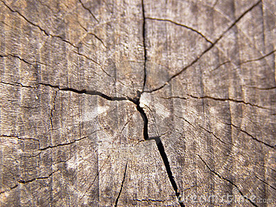Wood age