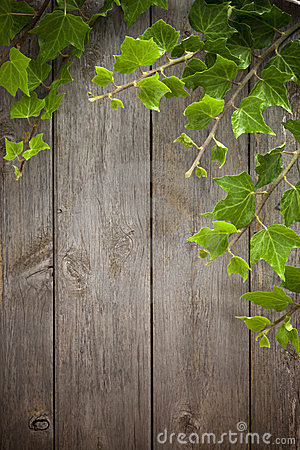 Free Wood And Ivy Background Stock Images - 24067474