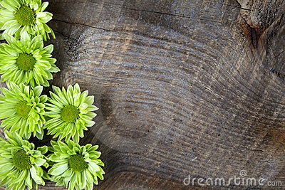 Wood background with green flower