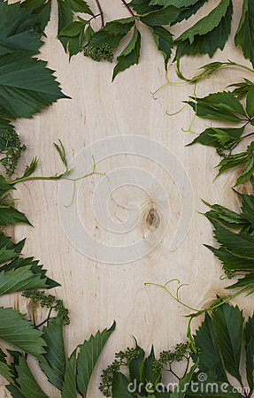Wood background with green foliage