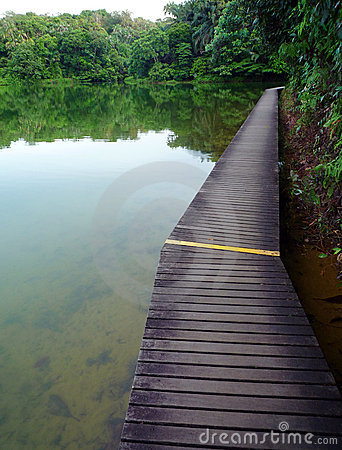 Wood boardwalk in nature reserve