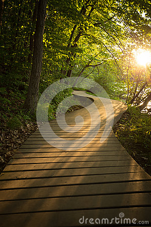 Free Wood Boardwalk Trail In Sunset Woods Forest Stock Image - 56321751
