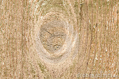 Wood with bough