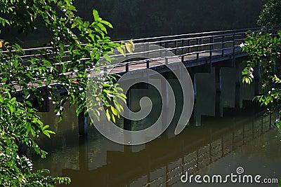 Wood bridge reflect water