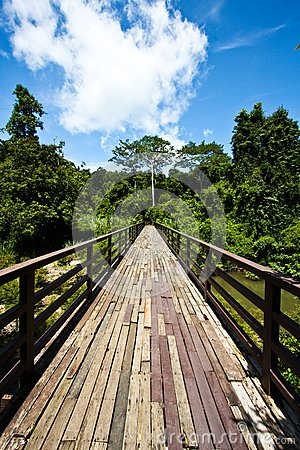 Wood bridge to jungle with Sky