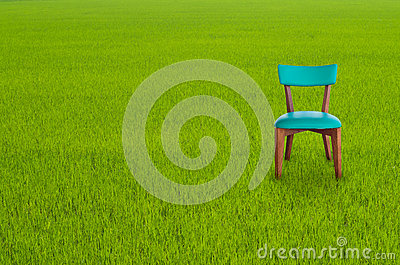 Wood chair on Green Grass
