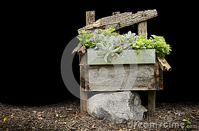 Wood Chair with Plants