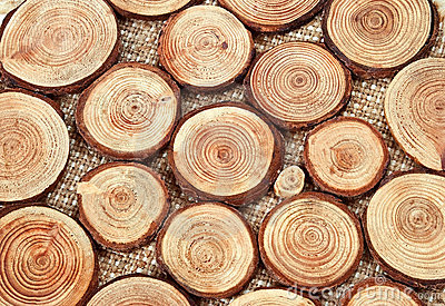 Wood circles with annual rings
