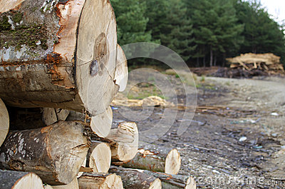 Cut tree logs