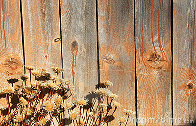 Wood and dry flowers