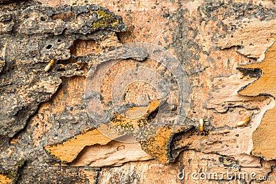 Wood eaten by termites