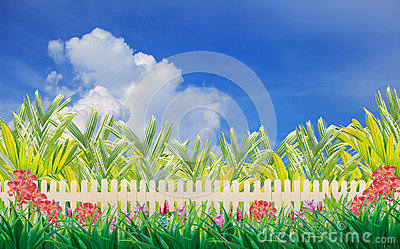 Wood fence and flower in home garden wiht blue sky