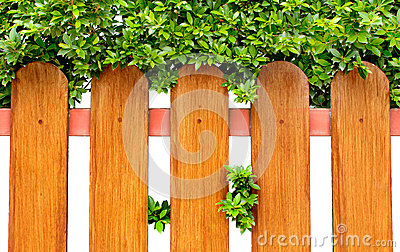 Wood fence and green bush