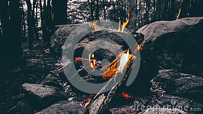 Wood Fire Camping On Forest Free Public Domain Cc0 Image
