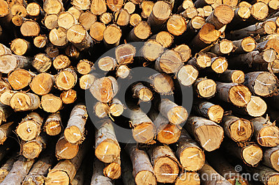 Wood for foundation pile stock photo image 29823430 for Wood piling foundation