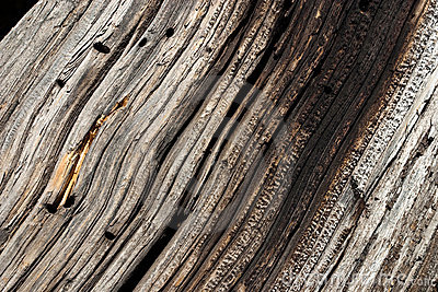 Wood Grain in Old Tree Log