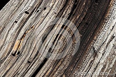 Wood Grain in Old Tree Log