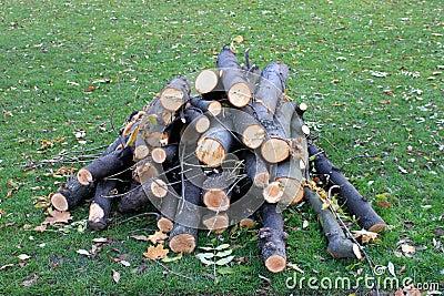 Wood heap on grass