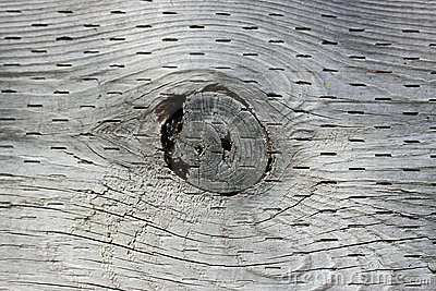 Wood Knot Hole
