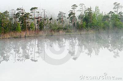 Wood lake coast in a fog